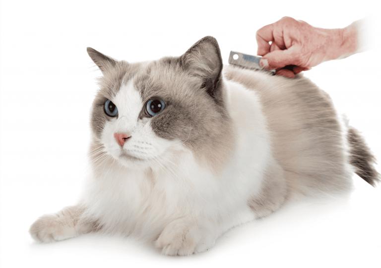 staranie sa o mačku